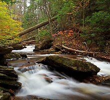 Autumn in Ganoga Glen by Tim Devine