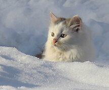 Snow Kitten by PatChristensen