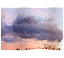 Murmaration of Starlings, November 5th 2011 Poster