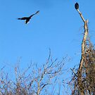 Vultures by Bine