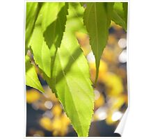 Mulberry Tree Poster