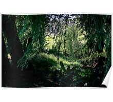 Wild Bushes  Poster