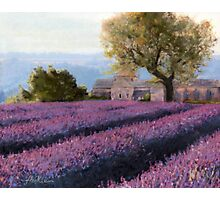 French Countryside - Lavander Photographic Print