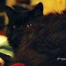 Roo's beautiful eyes by ibjennyjenny