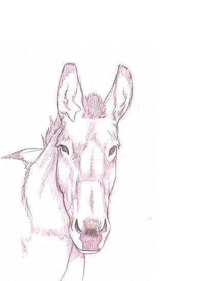 Domestic Donkey by A V S TURNER