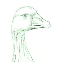 Grey Goose (domestic breed) by A V S TURNER