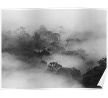 Borneo Mist Poster
