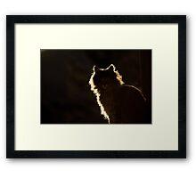 Colorado Wildcat Framed Print
