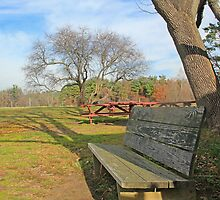 Wrong way bench by john forrant