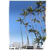 Palms growing into the sky - palmas creciendas hasta el cielo, Puerto Vallarta, Mexico Poster