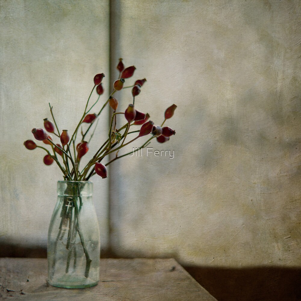 Rosehips by Jill Ferry