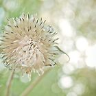 Weed and Bokeh by Susan Westervelt