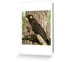Yellow-tailed Black-Cockatoo Greeting Card