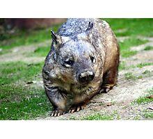 Wombat Photographic Print