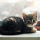 Kitten In The Window by joerelic37