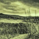 Dartmoor by MickHay