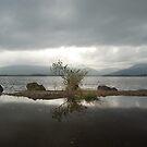 Loch Lomond by shakey