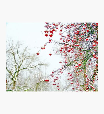 Good Tidings of Great Joy (no text) Photographic Print