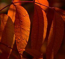 Crimson Colors by Sue  Cullumber