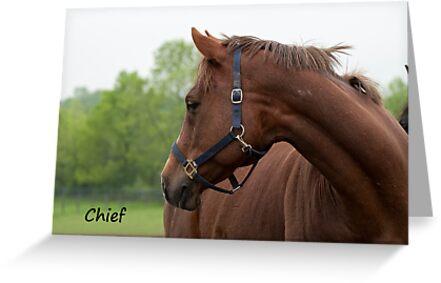 Chief - NNEP Ottawa, ON by Tracey  Dryka