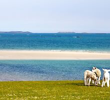 Berneray by Bjorn Olsson