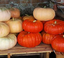 Pumpkins by shakey