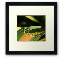 Ribbon Tears II Framed Print