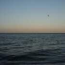 Seagulls at sea by Yonmei