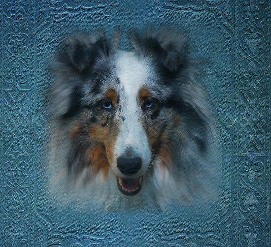 Sammy Blue by jodi payne