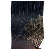 Startrails over an olive tree Poster