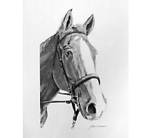 Commissioned Horse Portrait Photographic Print