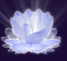 Lotus Flower by saleire
