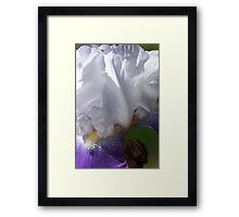 Iris - Full Bloom Framed Print