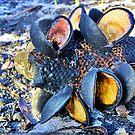 Fraser Island Seed Pods by Burnie