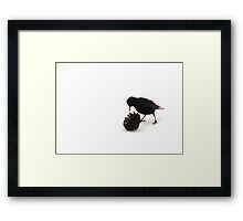 Silly Starlings 4 Framed Print
