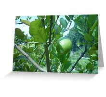 Sun Caressing Lemon Tree Greeting Card
