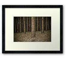 The magic forest Framed Print