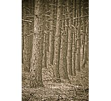 The magic forest Photographic Print