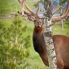 Wildlife by Warren Brown