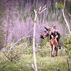 Moose  by Warren Brown