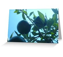 Trio of Exotic Fruit in the Sun Greeting Card