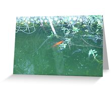 orange fish swimming in the shade Greeting Card