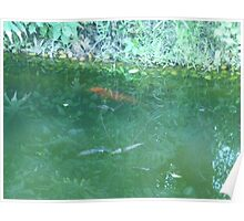 Huge Orange Fish Swimming by the Shore Poster