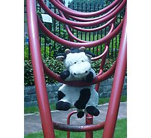 Moo Moo Hanging Out Photographic Print