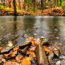 Autumn Creek by Yelena Rozov