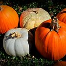 Pumpkins in the Patch by Tracey Hampton