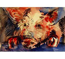 """Piggy"" Photographic Print"