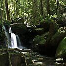 Lyrebird Falls Minnamurra by Ryan Conyers