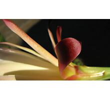 night blooming cereus #3 Photographic Print