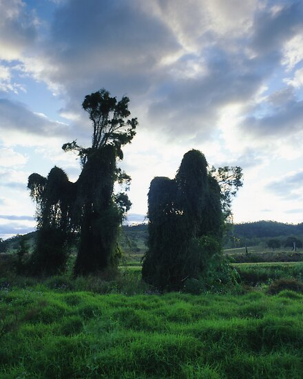 """Some Shifty Cloaked Figures..."" ∞ Dundas, QLD - Australia by Jason Asher"